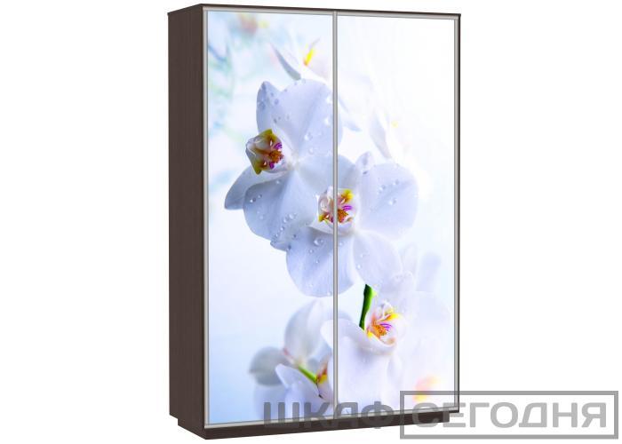 Шкаф-купе Сенатор 120х60х220 Класс Орхидеи