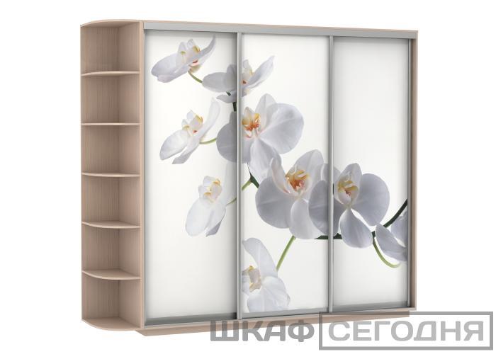 Шкаф-купе Е-1 Орхидея Трио